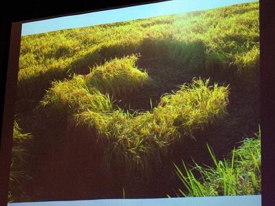 稲を刈り込んで作った大地のARマーカー。実に壮大なネタの仕込みである