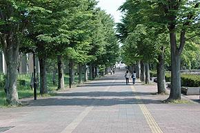 st_tukuba76.jpg