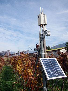 ブドウ畑に設置したセンシング・ネットワーク装置。気温や湿度、雨量などのデータを収集できる
