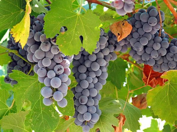 ワインの常識が変わる?