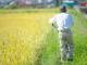 IoTで農作業者の健康管理 熱中症など事故防ぐ