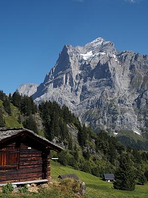 夏は山に囲まれた高原に放牧された牛を見ることができる