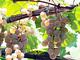急成長中の日本ワイン 礎を築いた先駆者たちの挑戦