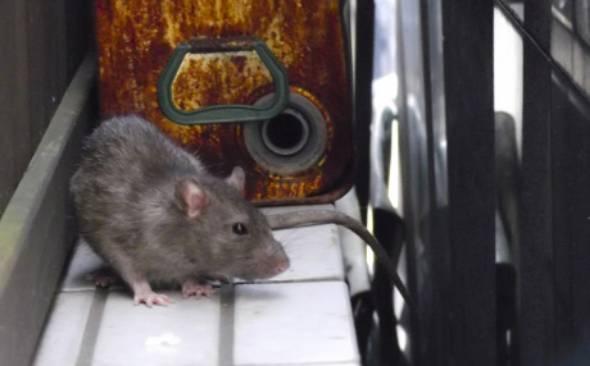 東京 ネズミ 駆除