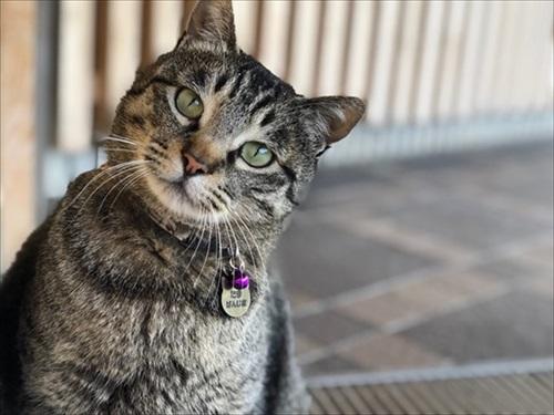 全国の宿 自慢の看板猫ランキング