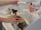 大和ハウス、猫用の水洗トイレとシャンプーシンクが合体した「ネコレット」発売 猫との快適なおうち時間を提案
