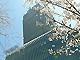 桜満開、「東京ミッドタウン」が本日開業