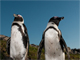 山形豪・自然写真撮影紀:アフリカが「大陸」であることを感じさせる、南アとペンギン