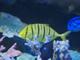 今日から始めるデジカメ撮影術:第129回 水族館とガラスと明るさの関係