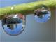 デジタル一眼トリッキー:第1回 風景が映り込んだ水滴マクロ写真の撮り方