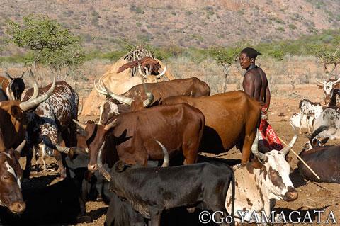 山形豪・自然写真撮影紀:ナミビアへの誘い その3 ヒンバ族