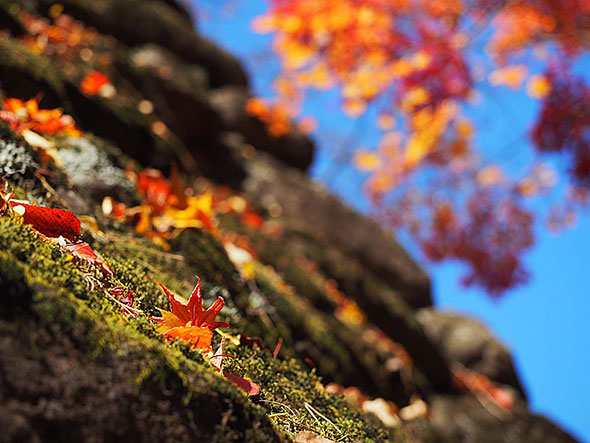 小諸城跡の石垣