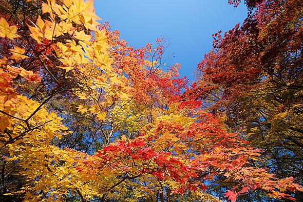 懐古園の紅葉