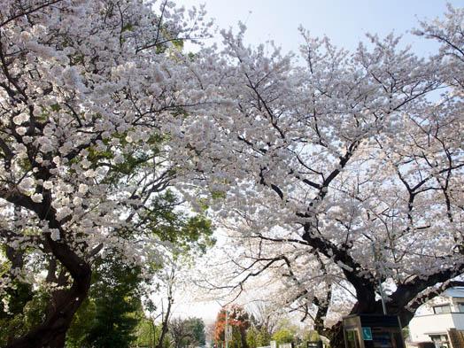 デジカメ撮影術 桜
