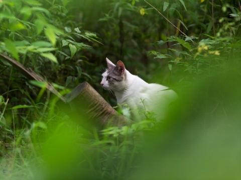 ケースケ・ウッティー 写真展 「イエネコの野生」