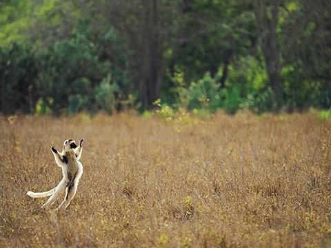 2016年オリンパス/WWFカレンダー完成記念 岩合 光昭 写真展「MADAGASCAR/原猿の棲む島.マダガスカル」