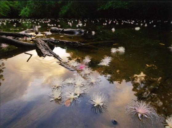 鈴木一雄写真展『日本列島—花乃聲(はなのこえ)—』