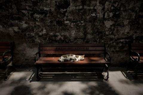 曽根原 昇 写真展「イスタンブルの壁のなか」