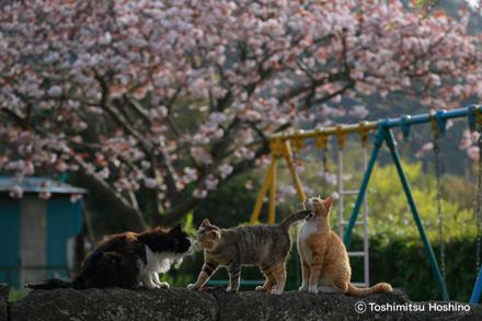 星野俊光 写真展「海猫夢幻〜東京湾岸に生きる猫たちの記憶〜」