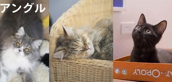 Adobe Photoshop Mix 猫の日