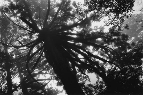 写真歴史博物館 企画写真展 水越 武 写真展「真昼の星」