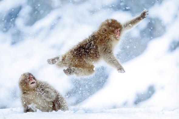 エプソンフォトグランプリ2015年度ネイチャー部門 グランプリ 増田 晋一「Jump & Jump」