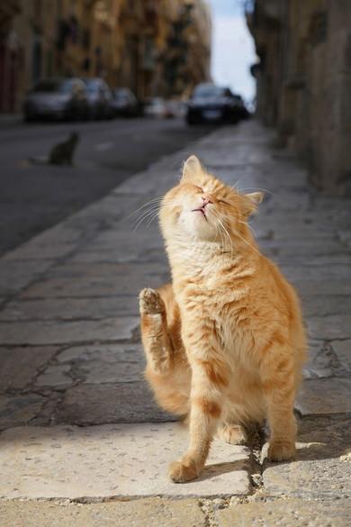 新美 敬子「マルタの猫」