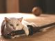 『猫侍』で人気沸騰! 玉之丞が写真集に