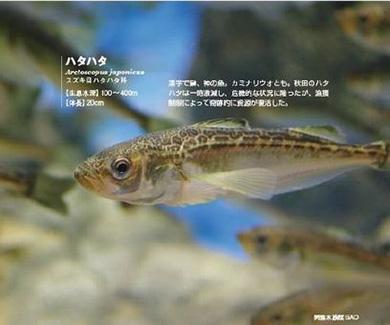 実は美味? グロテスクな深海魚の刺身