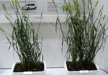 図32 日産自動車の高性能植物