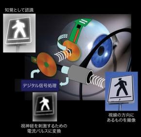 図3 体外部モジュールから眼球内の人工網膜に信号を伝える仕組み