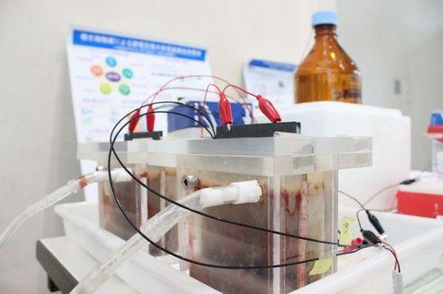 微生物燃料電池のデモの風景。赤い集合体が微生物の「ジオバクター」である。1つの水槽の大きさは300mlだそう