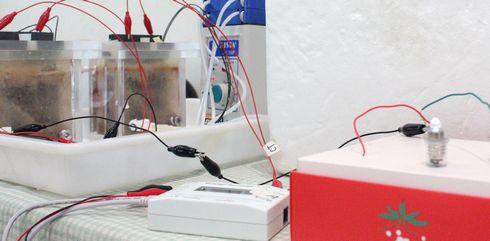 電気エネルギーも取り出せる微生物燃料電池。この大きさの水槽では1つにつき0.3Vの電圧が発生していた。デモでは、2つの水槽をつなげて、豆電球(電源電圧0.5V)を点灯させていた