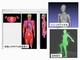 電波と人体の相互影響を調査できるソフトウェア