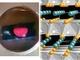 希少元素を使わない赤く光る窒化物半導体を発見