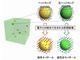 磁気構造のトポロジーを高効率熱電変換へ応用