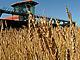 農業という生き方、若者や中高年が農業に目を向けた理由
