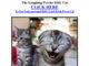 子猫の写真で感染、Storm Wormが手口切り替え