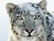 アップル、最新Mac OS X「Snow Leopard」の発売日を8月28日に決定