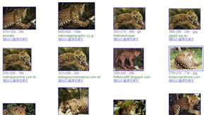 ah_jaguar2.jpg