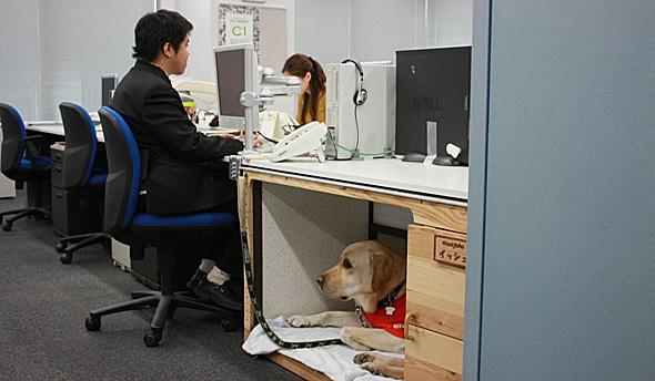 待機する盲導犬のイッシュ