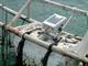 IoTで鯖の養殖を効率化——福井県小浜市で漁業IoTプロジェクトが始動