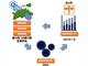 ブロッコリーの「出荷予測モデル」を構築 正確な出荷見込みで確実で有利な販売へ——NTTデータとJA香川県ら、開発・実証を開始