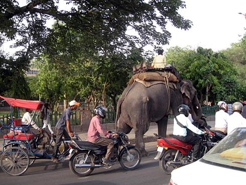街中を歩く象