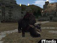 hn_buffalo.jpg