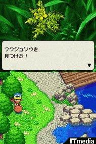 wk_070423kawa02.jpg