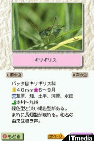 wk_070528mushi02.jpg