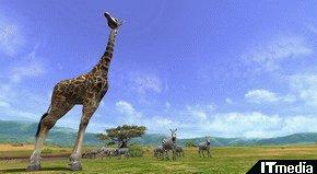 wk_080606afrika12.jpg