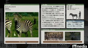 wk_080606afrika14.jpg