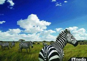 wk_080819afrika01.jpg